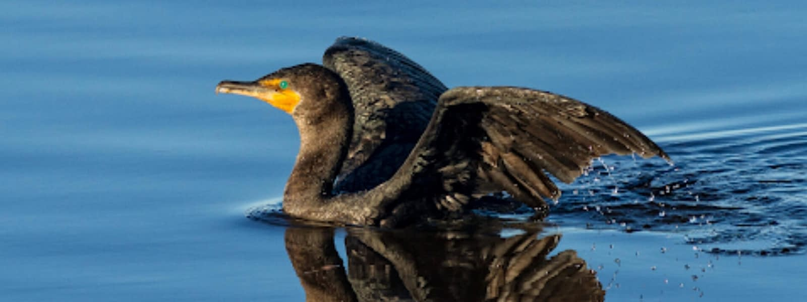 Sharon Milligan/Audubon Photography Awards